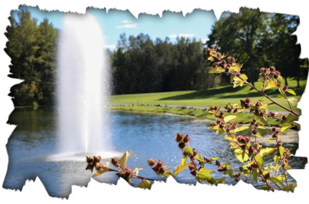 website golf homepage